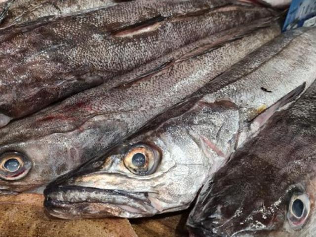 Vente poissons frais